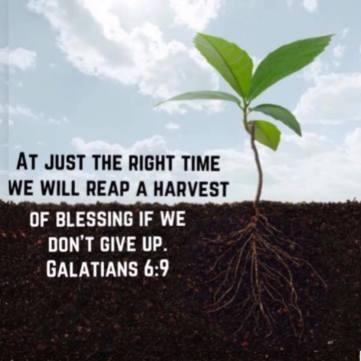 Harvest verse