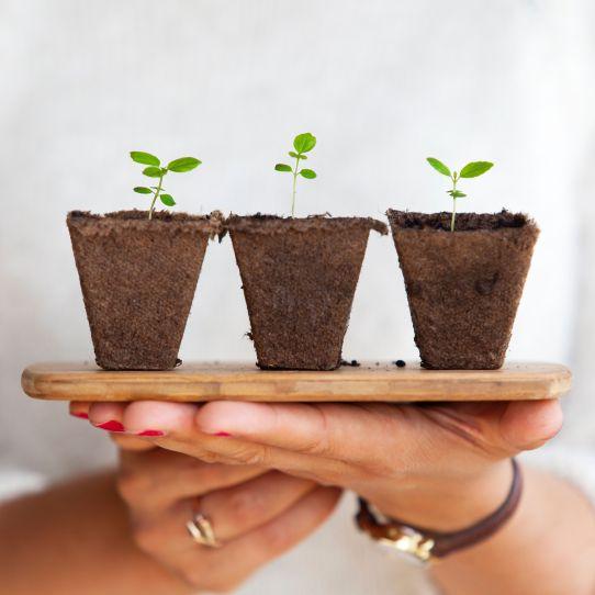 Little plants