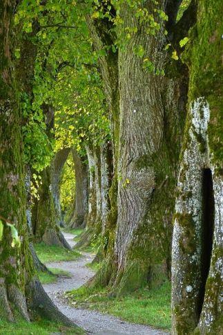 trees-2897757_640