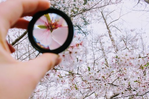 person-holding-round-framed-mirror-near-tree-at-daytime-979927